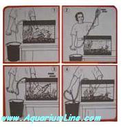 """L'immagine """"http://www.aquariumline.com/catalog/images/Gravelimm3.JPG"""" non può essere visualizzata poiché contiene degli errori."""