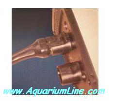 """L'immagine """"http://www.aquariumline.com/catalog/images/Koralia4.JPG"""" non può essere visualizzata poiché contiene degli errori."""
