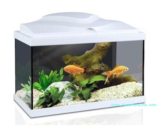 Ciano acquario aqua 60 colore bianco for Acquario bianco usato