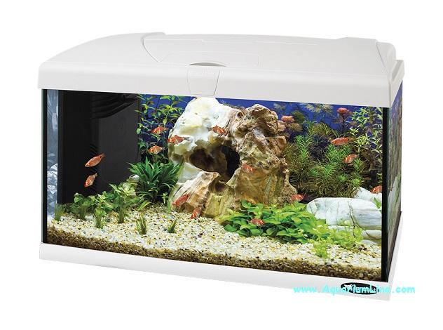 Ferplast capri 60 led bianco acquario accessoriato for Acquario bianco usato