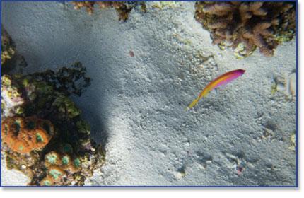 L'immagine �http://www.aquariumline.com/catalog/images/imag_ocean_direct2.jpg� non pu� essere visualizzata poich� contiene degli errori.