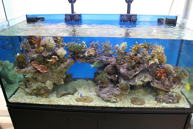 """L'immagine """"http://www.aquariumline.com/catalog/images/scarico_xaqua000.JPG"""" non può essere visualizzata poiché contiene degli errori."""