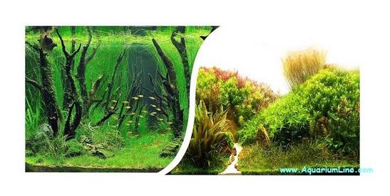 sfondo esterno acquario fai da te: esterno acquaportal forum ... - Sfondo Esterno Per Acquario Fai Da Te