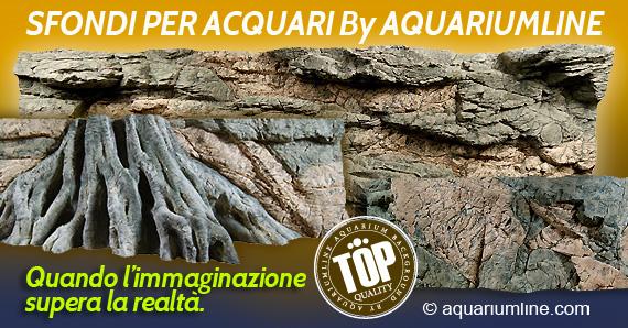 Aquarium line migliori prodotti per il tuo acquario e for Sfondi per acquari