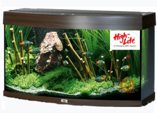 """L'immagine """"http://www.aquariumline.com/catalog/images/vision_T5.jpg"""" non può essere visualizzata poiché contiene degli errori."""