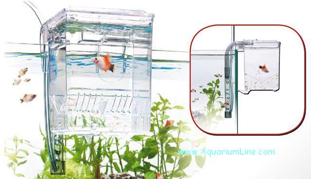 Sala parto esterna negozio acquari for Sala parto pesci