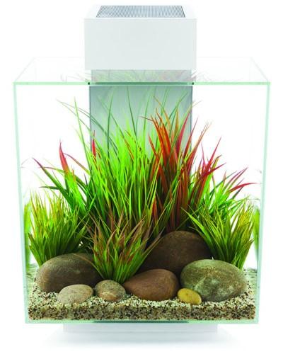 Askoll edge led bianco capacit 46 litri aquariumline for Acquario a colonna