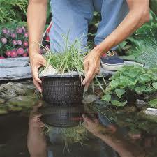 Cesto in plastica per piante acquatiche for Piante acquatiche laghetto