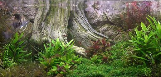 Aql background 3d modello amazzonia for Sfondi per acquari