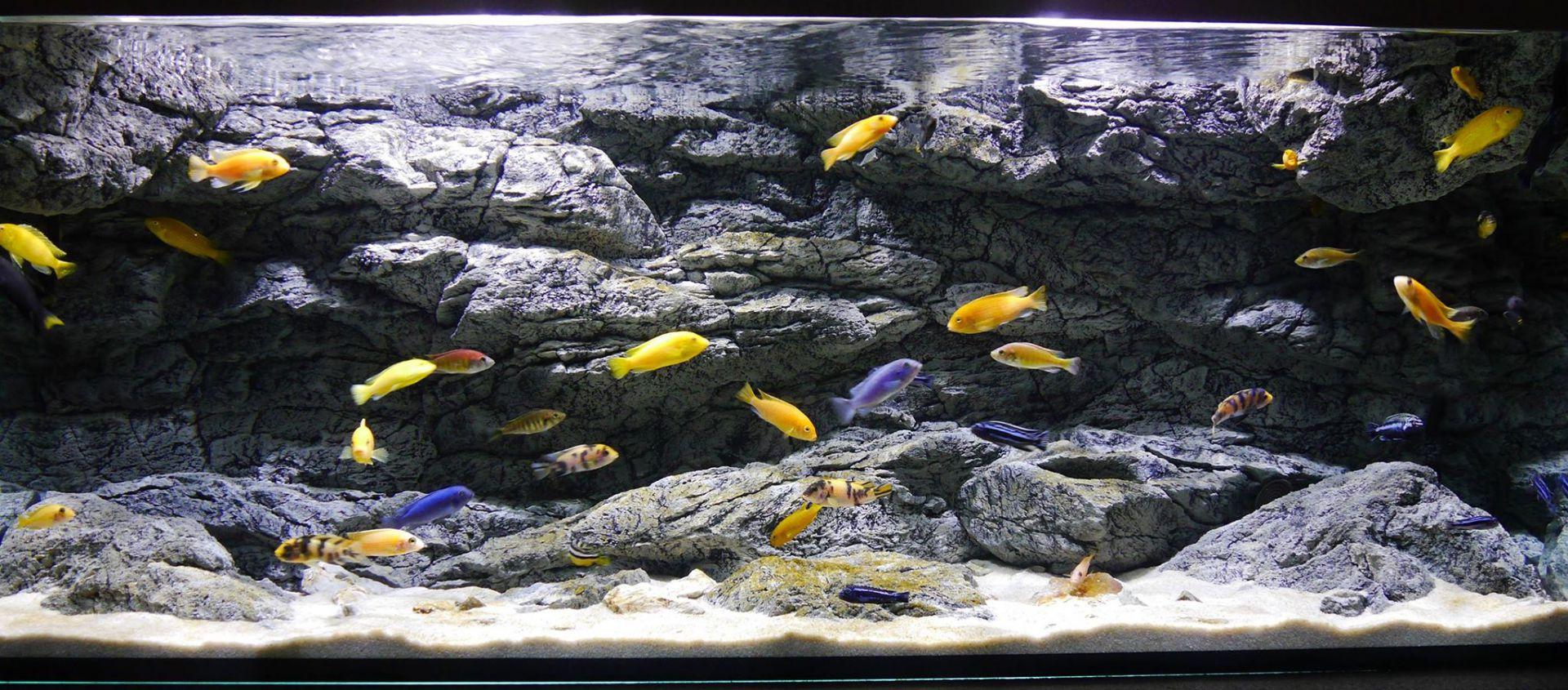 Aql background line 3d negozio acquari for Sfondi per acquari